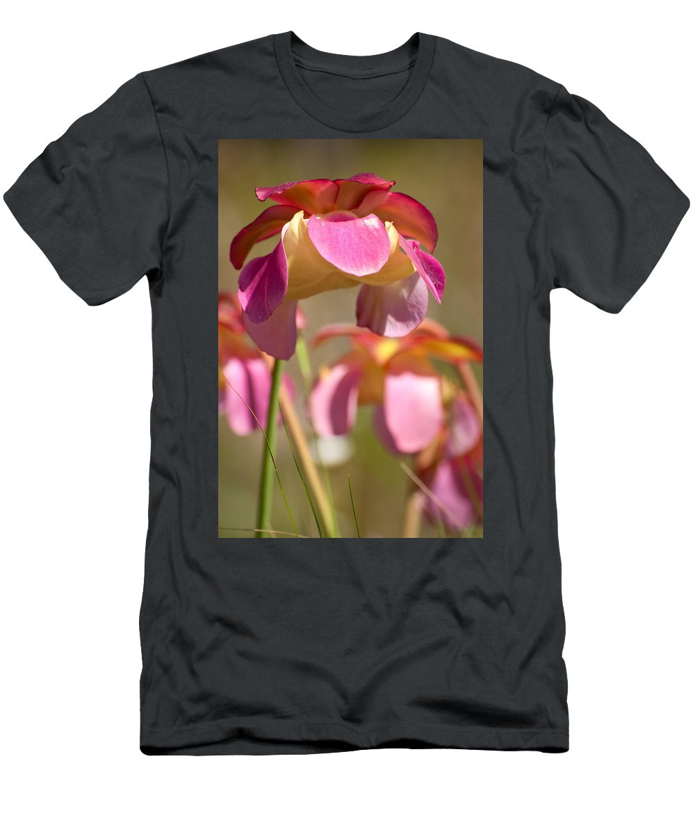 Pitcher Men's T-Shirt (Athletic Fit) featuring the photograph Gulf Purple Pitcher Plant by Rich Leighton