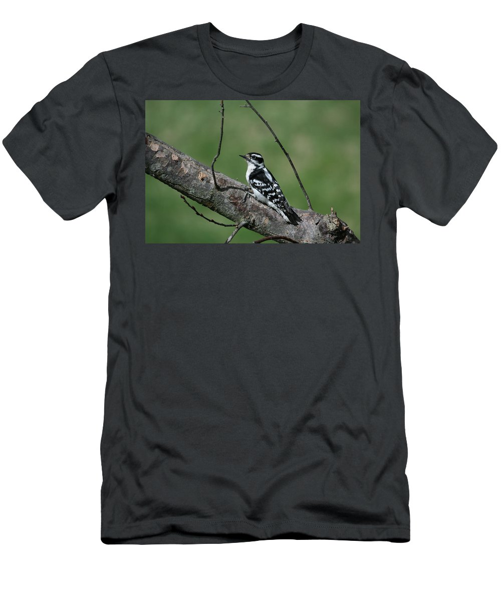 Woodpecker Men's T-Shirt (Athletic Fit) featuring the photograph Hairy Woodpecker by Karol Livote