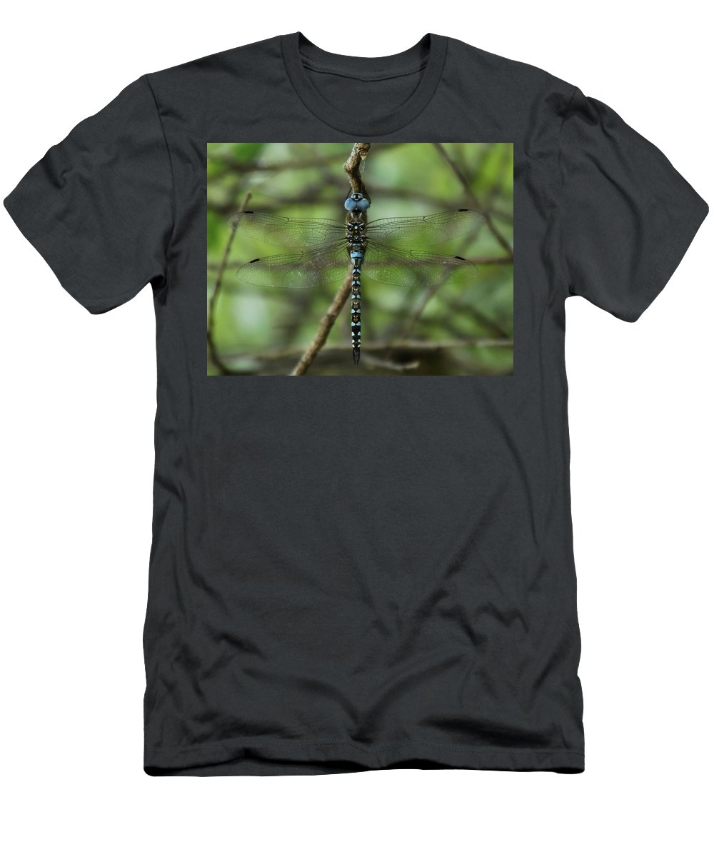 Dragon Men's T-Shirt (Athletic Fit) featuring the photograph Hang Out by Donna Blackhall