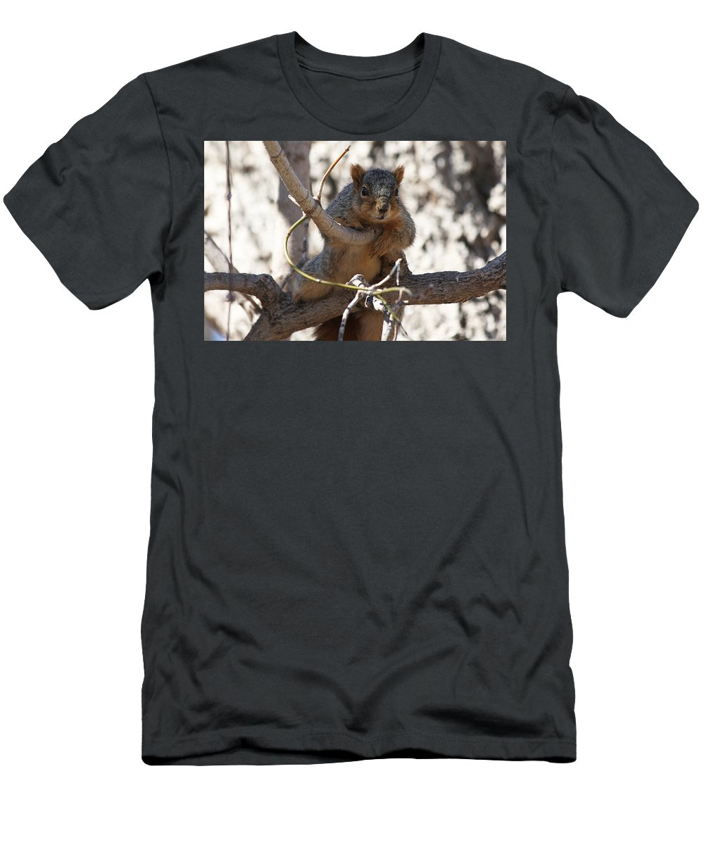Squirrels Men's T-Shirt (Athletic Fit) featuring the photograph Hanging Around by Lori Tordsen