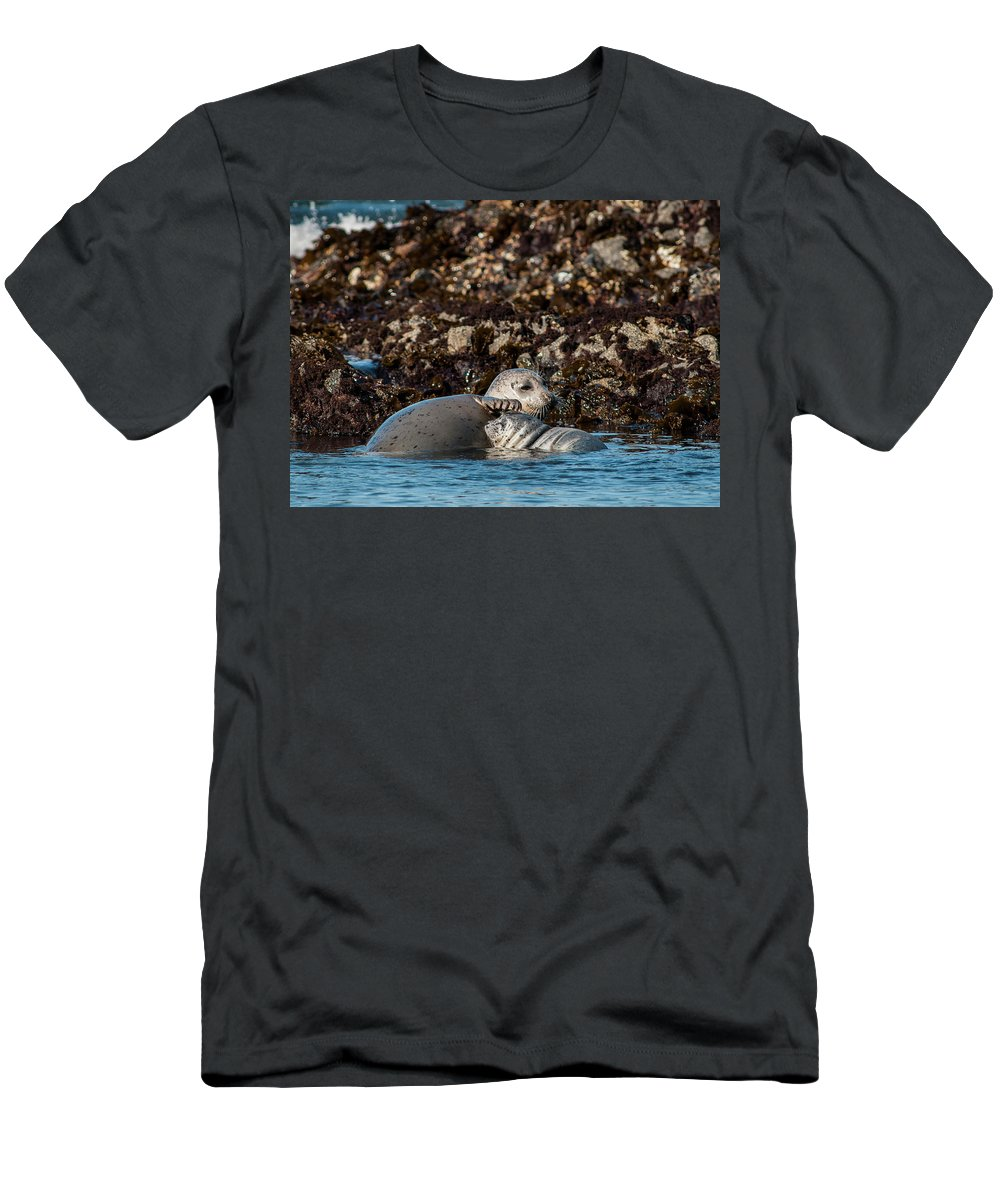 Animals Men's T-Shirt (Athletic Fit) featuring the photograph Harbor Seal And Pup by Robert Potts