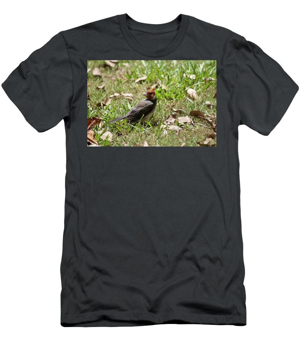 Birds Men's T-Shirt (Athletic Fit) featuring the photograph Hawaiian Cardnal by Donald Pash