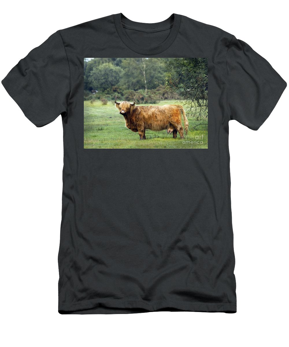 Heilan Coo Men's T-Shirt (Athletic Fit) featuring the photograph Heilan Coo by Angel Ciesniarska