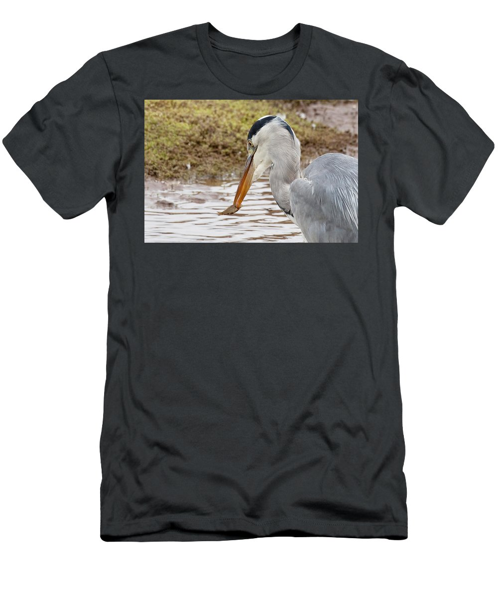 Heron Men's T-Shirt (Athletic Fit) featuring the photograph Heron Harpoon by Bob Kemp