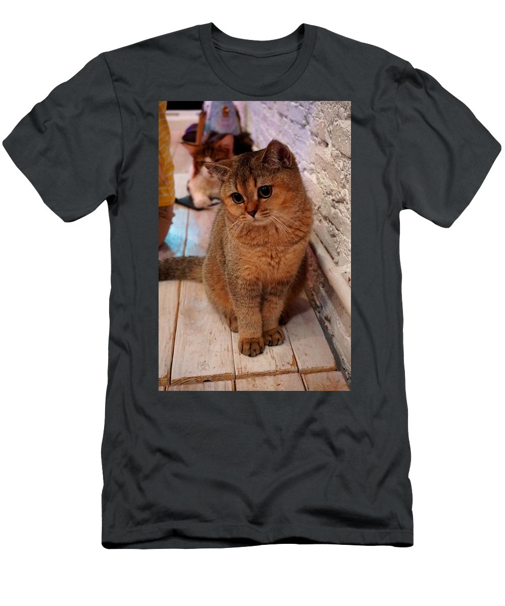Announcement Men's T-Shirt (Athletic Fit) featuring the painting Hi My Name Is Sweetie Pie H B by Gert J Rheeders