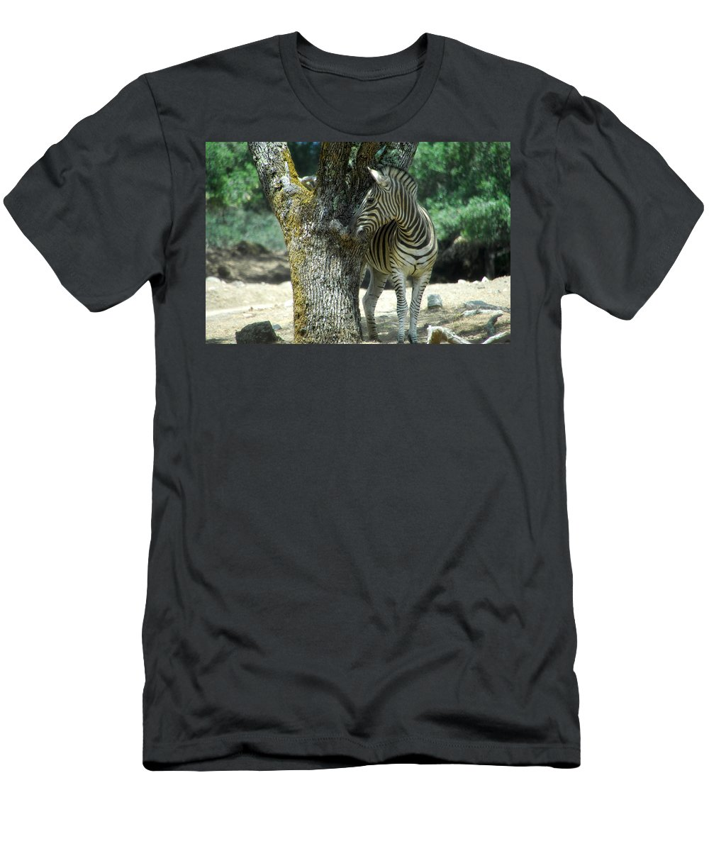 Zebra Men's T-Shirt (Athletic Fit) featuring the photograph Hide And Seek by Donna Blackhall
