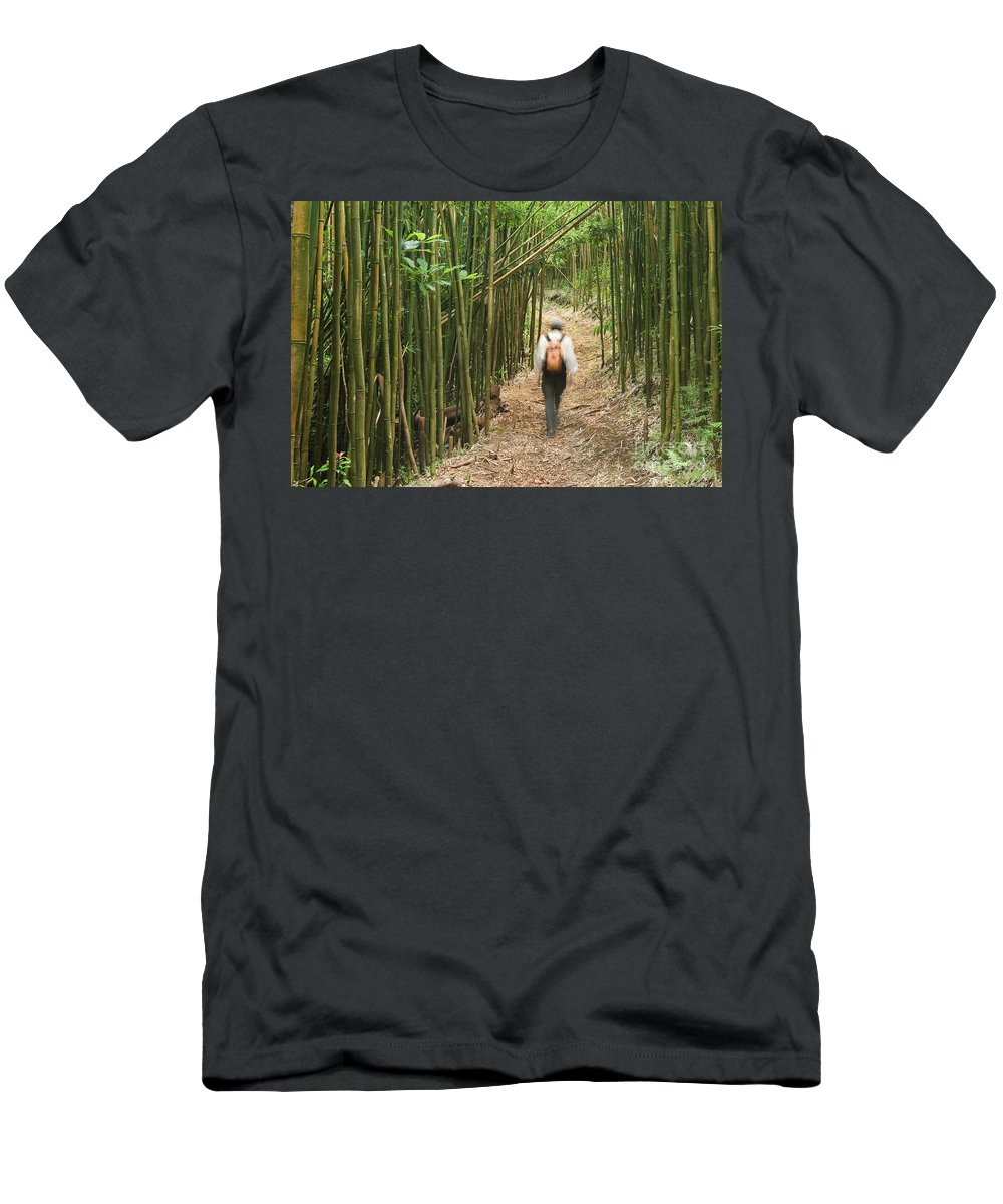 Adventure Men's T-Shirt (Athletic Fit) featuring the photograph Hiker In Bamboo Forest by Greg Vaughn - Printscapes