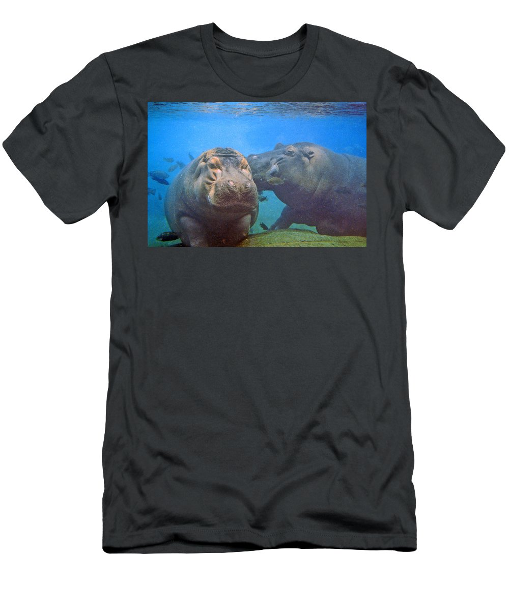 Animals Men's T-Shirt (Athletic Fit) featuring the photograph Hippos In Love by Steve Karol