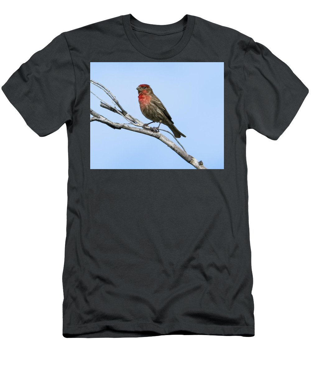 Myhaver Photography Men's T-Shirt (Athletic Fit) featuring the photograph House Finch H11 by Mark Myhaver