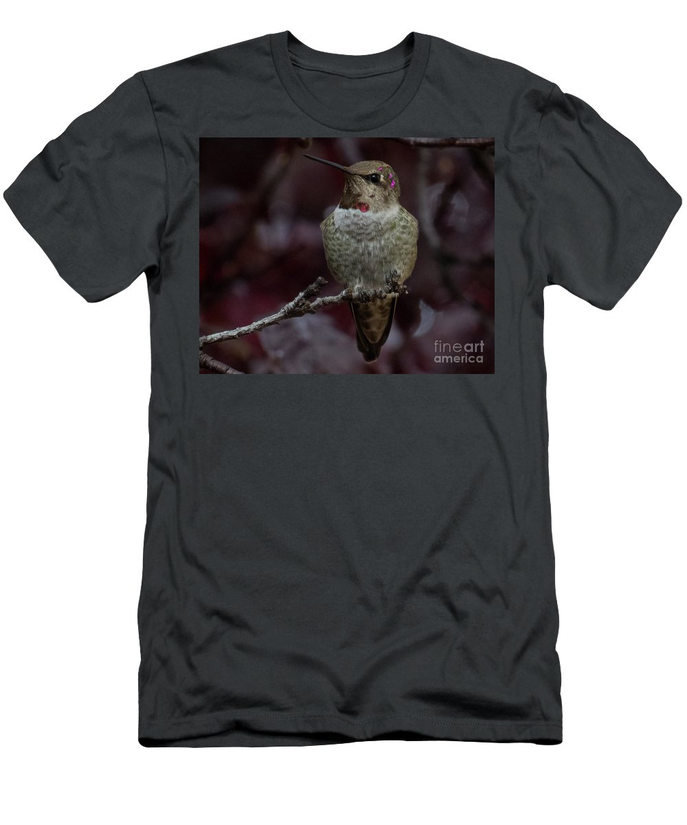 Hummingbird Men's T-Shirt (Athletic Fit) featuring the photograph Hummingbird 17 by Christy Garavetto