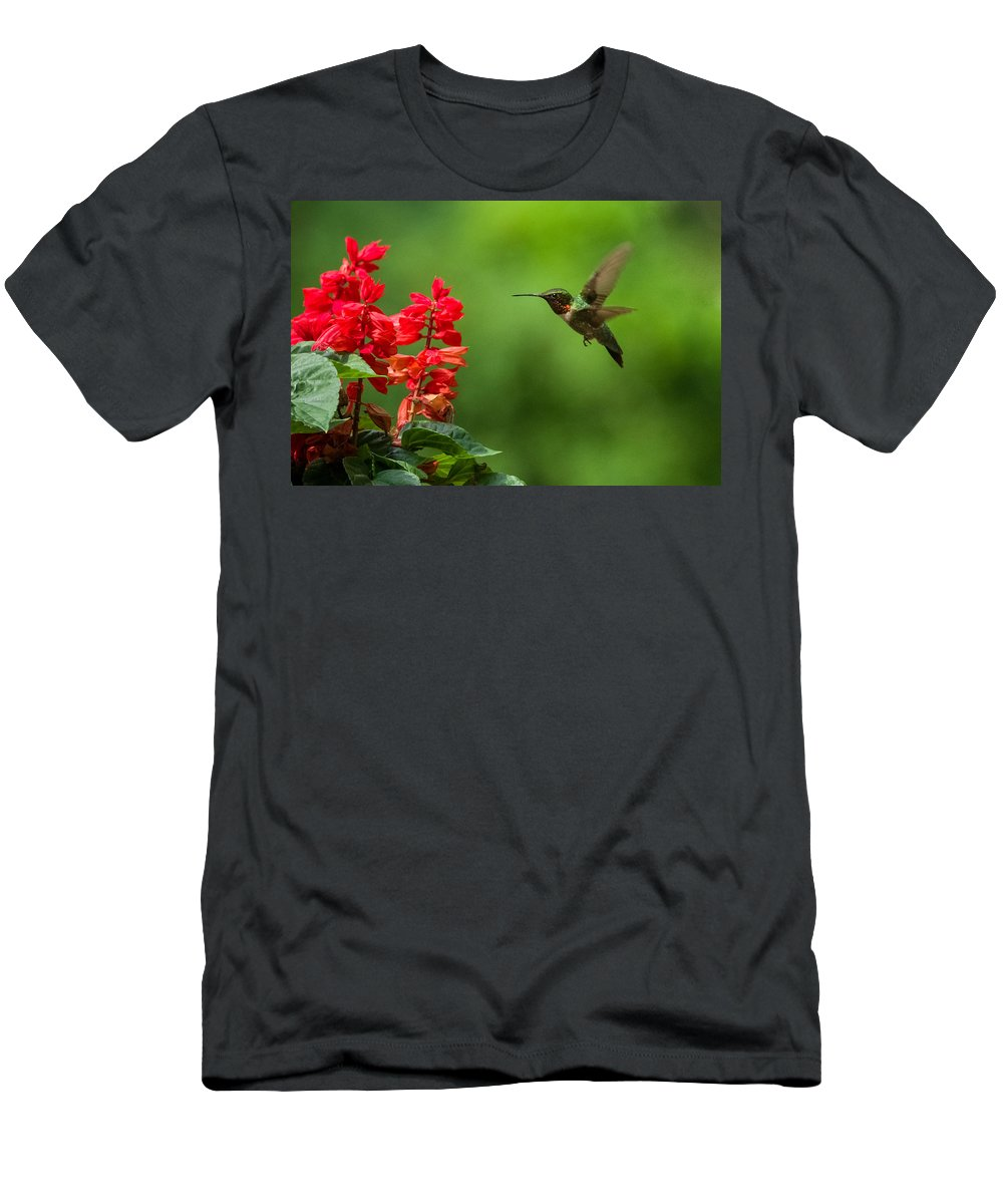 Da* 300 Men's T-Shirt (Athletic Fit) featuring the photograph Hummingbird And Scarlet Sage by Lori Coleman