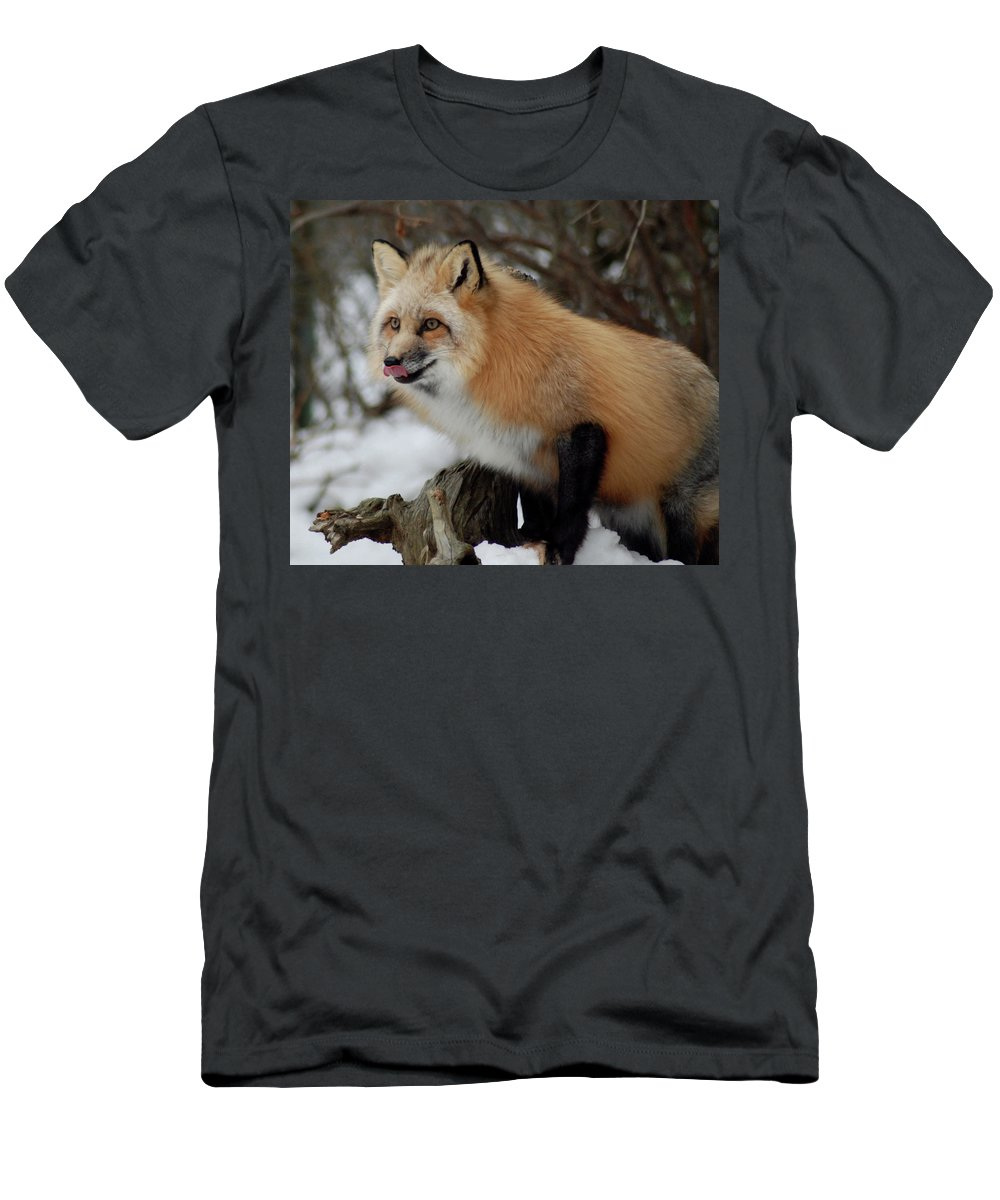 Fox Men's T-Shirt (Athletic Fit) featuring the photograph Hungry Fox by Richard Bryce and Family