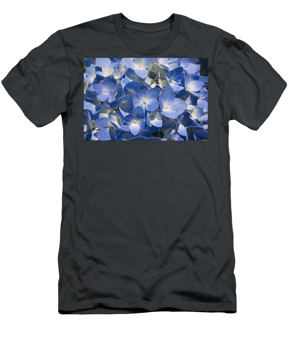 Flower Bloom Blue White Close Nature Sunny Summer Hydrangea Men's T-Shirt (Athletic Fit) featuring the photograph Hydrangea by Andrei Shliakhau