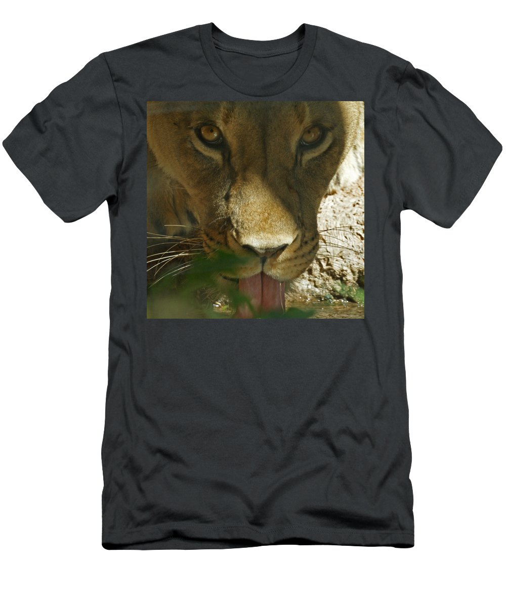 Lion Men's T-Shirt (Athletic Fit) featuring the photograph I See You 2 by Ernie Echols