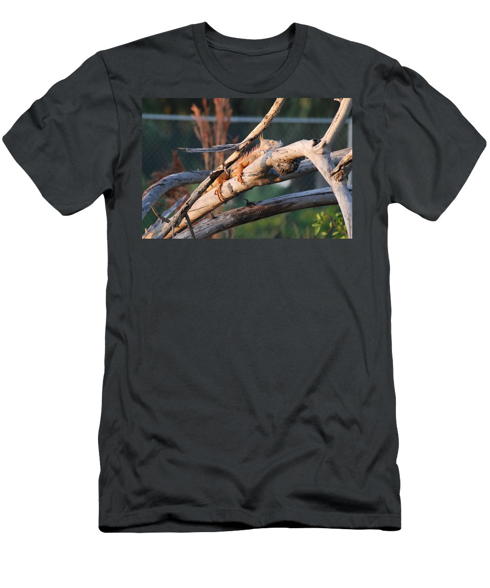 Branches Men's T-Shirt (Athletic Fit) featuring the photograph Igauna On A Stick by Rob Hans