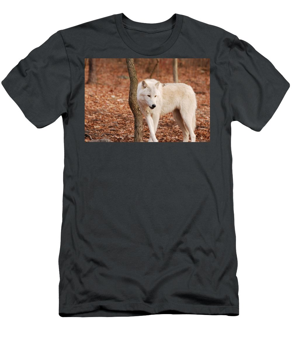 Wolf Men's T-Shirt (Athletic Fit) featuring the photograph I'm A Wolf by Lori Tambakis