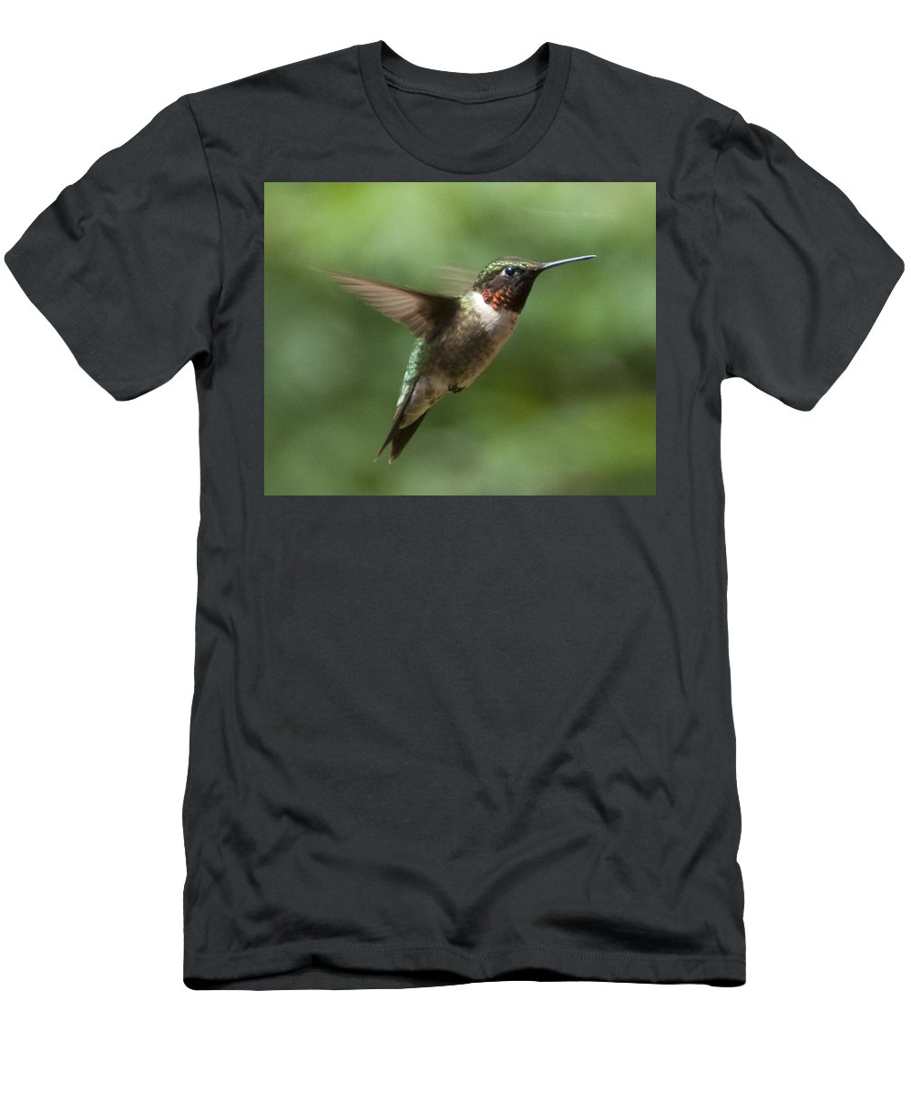 Bird Men's T-Shirt (Athletic Fit) featuring the photograph In Flight by Steven Natanson