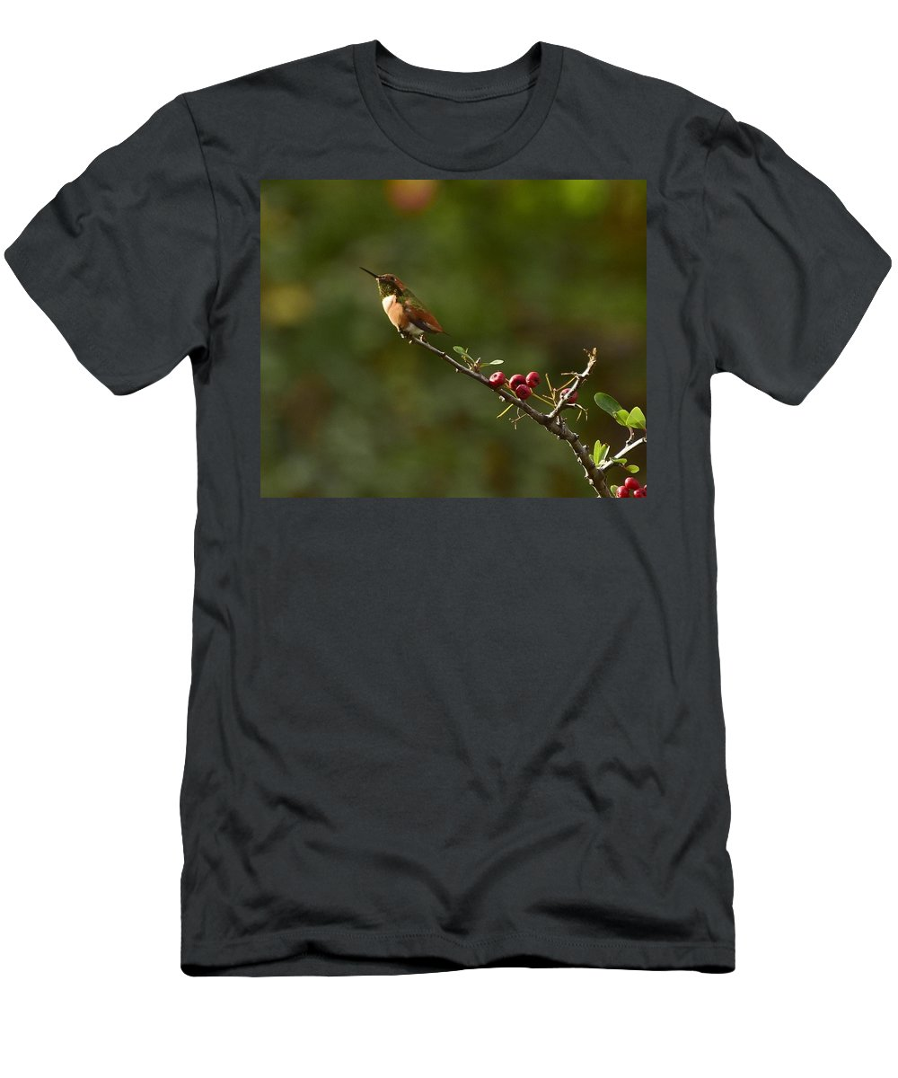 Linda Brody Men's T-Shirt (Athletic Fit) featuring the photograph In Line With The Branch by Linda Brody