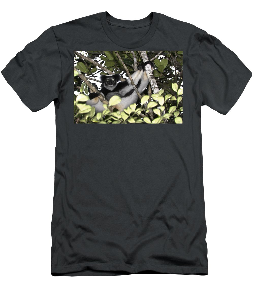 Madagascar Men's T-Shirt (Athletic Fit) featuring the photograph Indri Indri by Michele Burgess
