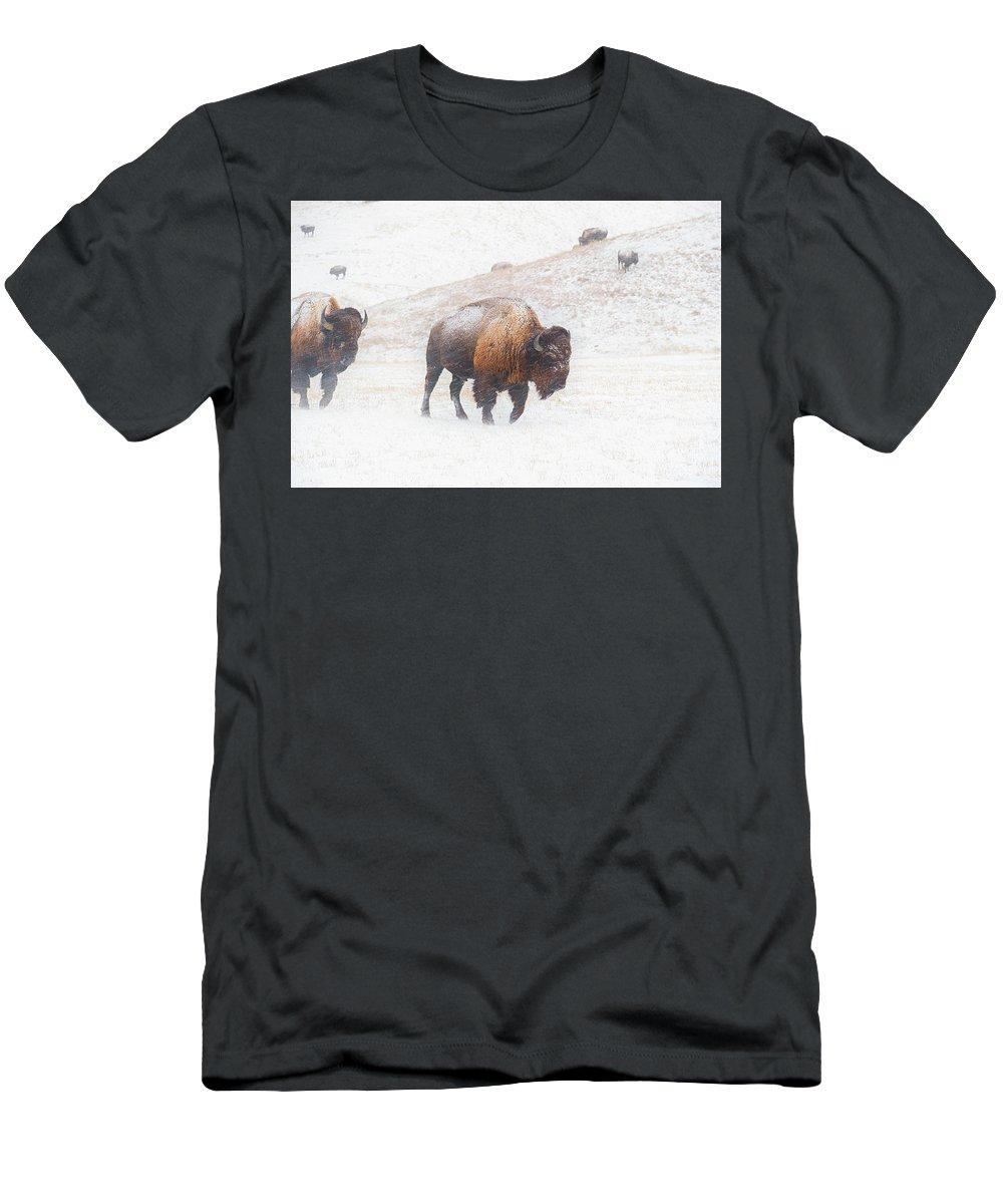 Buffalo Men's T-Shirt (Athletic Fit) featuring the photograph Into The Storm by Derald Gross