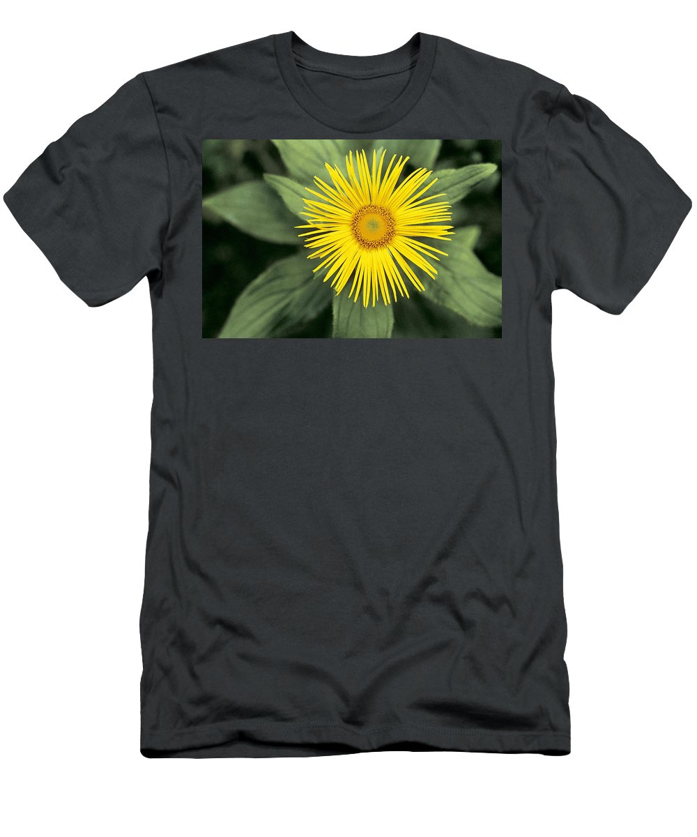 Yellow Men's T-Shirt (Athletic Fit) featuring the photograph Inula Grandiflora by American School