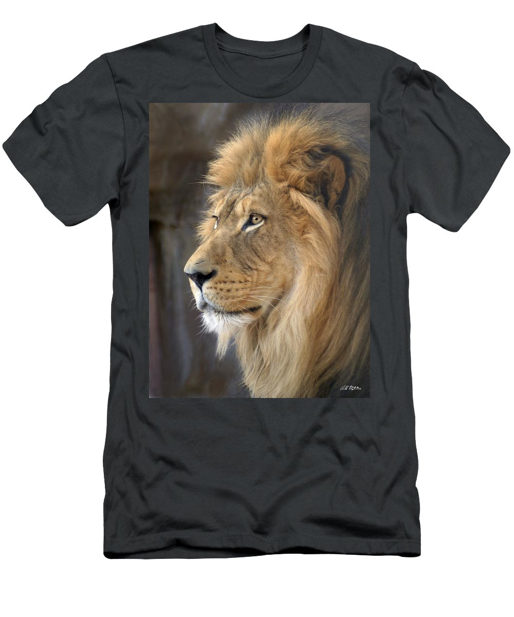 Lions Men's T-Shirt (Athletic Fit) featuring the photograph Israel by Bill Stephens
