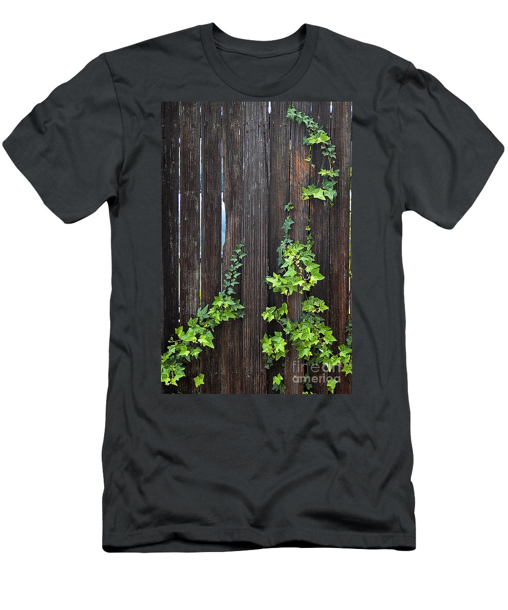 Clay Men's T-Shirt (Athletic Fit) featuring the photograph Ivy On Fence by Clayton Bruster