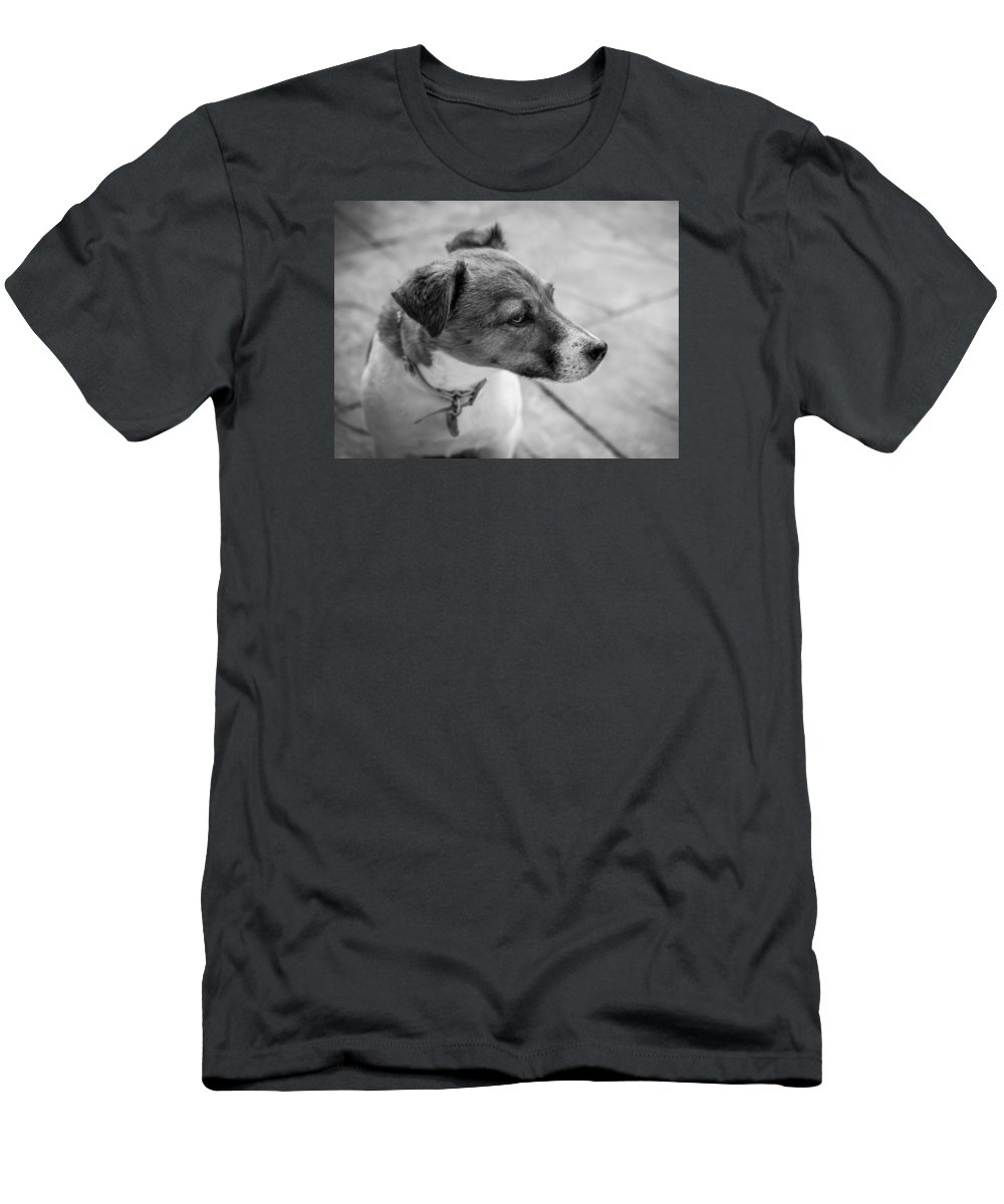 Dog Men's T-Shirt (Athletic Fit) featuring the photograph Jack Russell by Nick Bywater