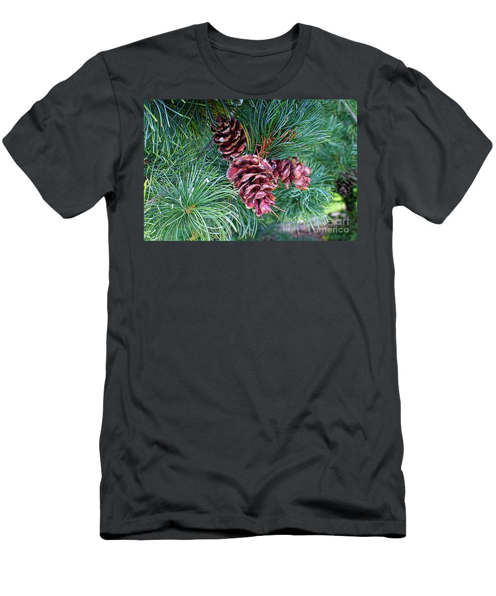Japanese White Pine Cones Men's T-Shirt (Athletic Fit) featuring the photograph Japanese White Pine Pinecones by Sharon Talson