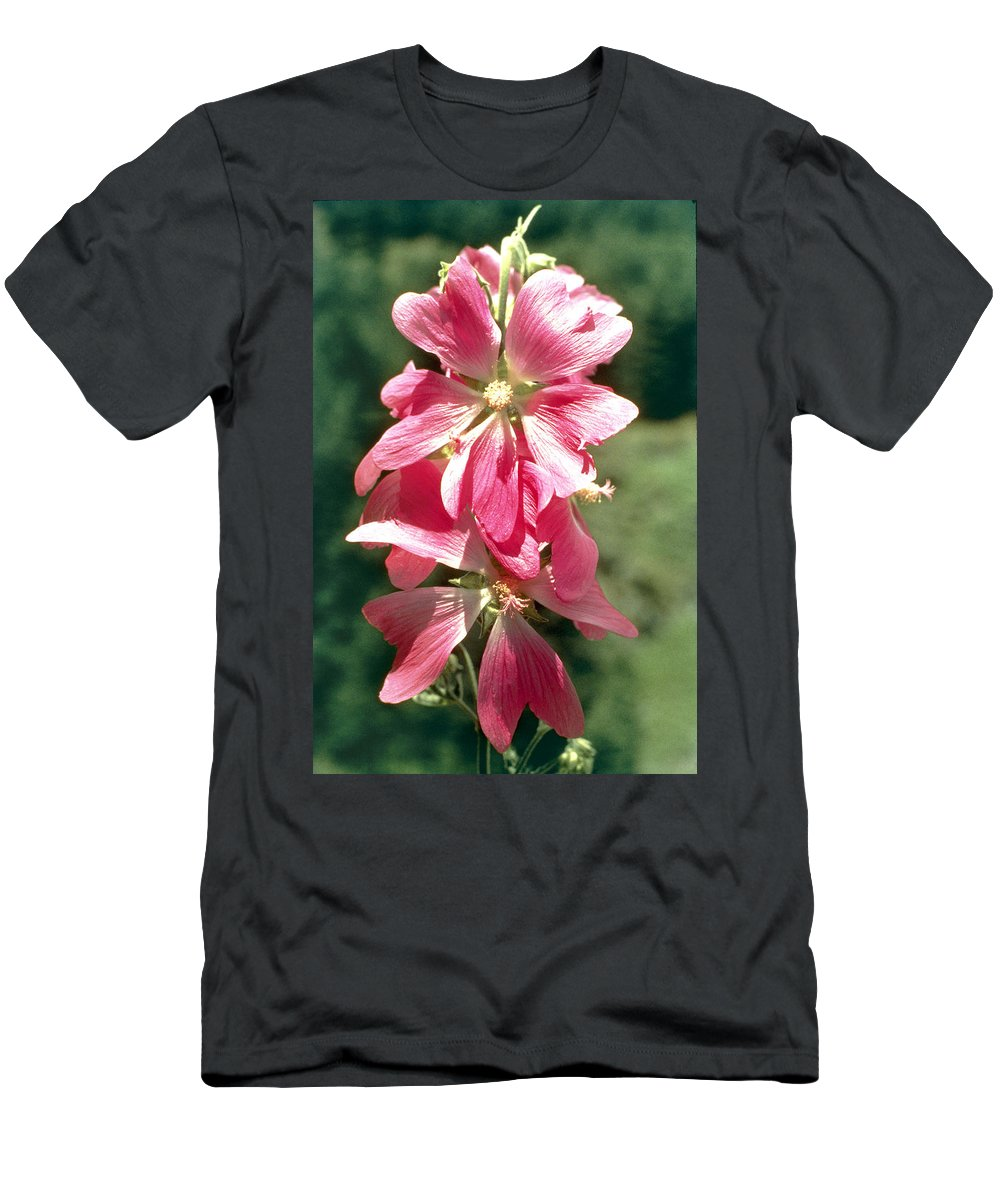 Kashmir Tree Mallow Men's T-Shirt (Athletic Fit) featuring the photograph Kashmir Tree Mallow by American School