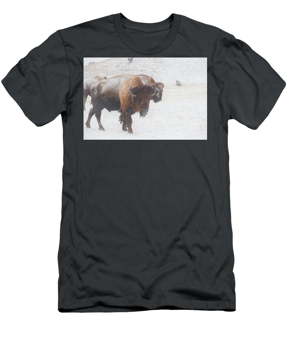 Buffalo Men's T-Shirt (Athletic Fit) featuring the photograph Keep Moving by Derald Gross