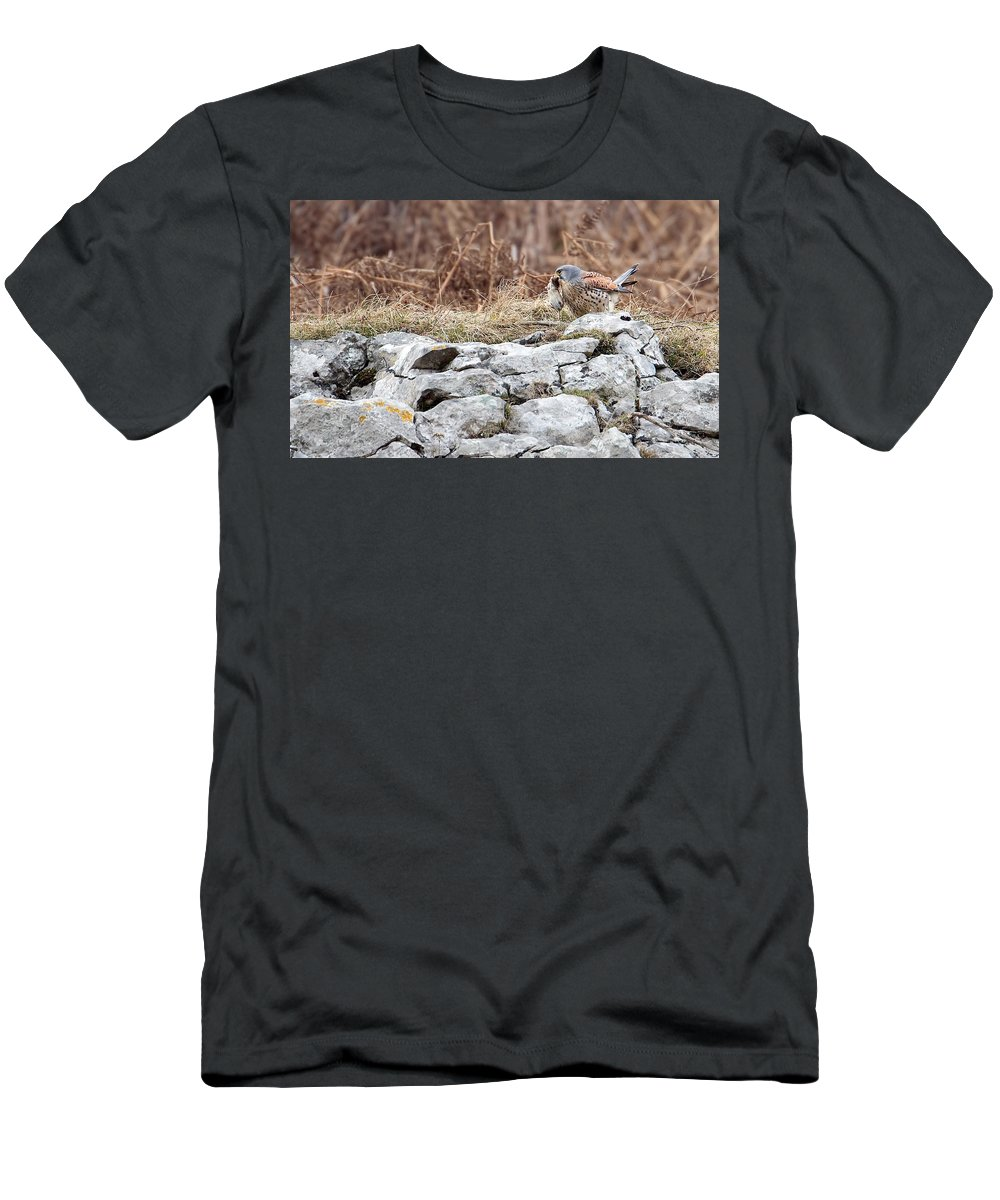 Kestrel Men's T-Shirt (Athletic Fit) featuring the photograph Kestrel With Prey by Bob Kemp