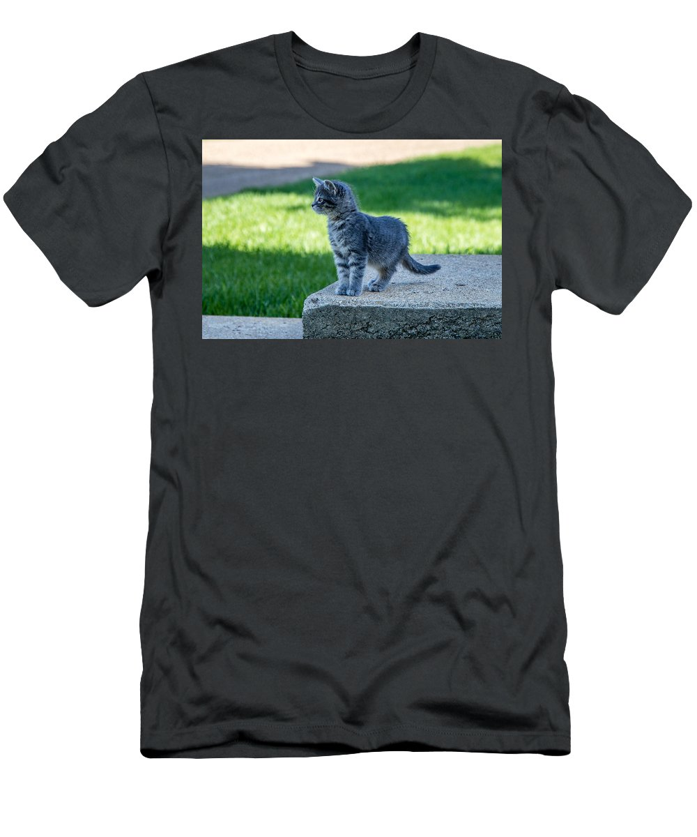 Kitten Men's T-Shirt (Athletic Fit) featuring the photograph Kitten 1 by Chad Rowe