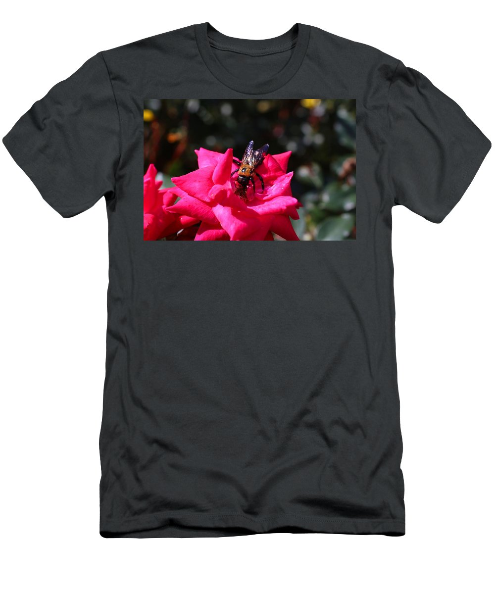 Rose Men's T-Shirt (Athletic Fit) featuring the photograph Knockout Rose And Bumblebee by Kathryn Meyer