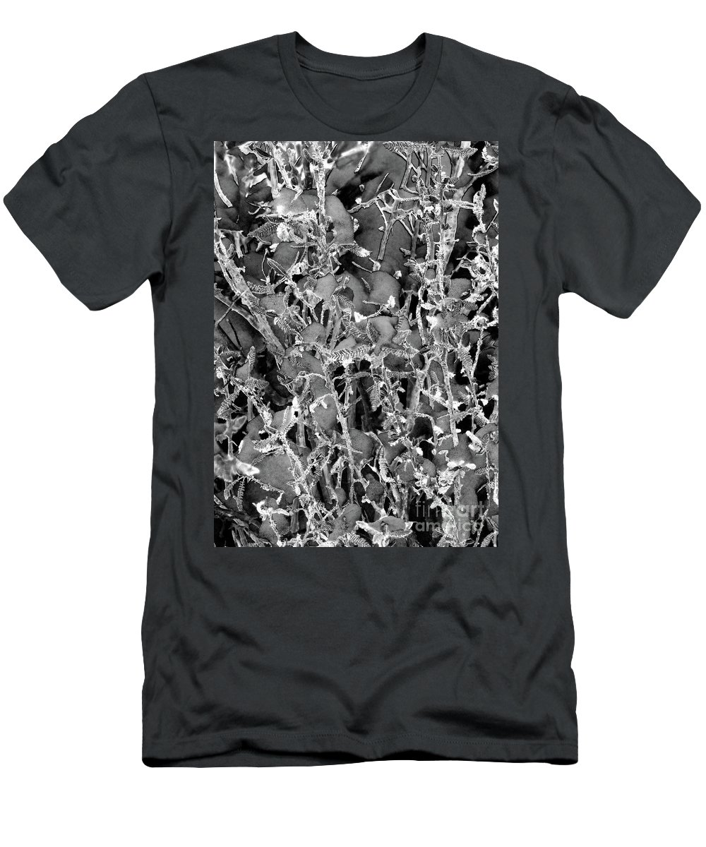 Lace Pricks Snow In Sierra Mountains Men's T-Shirt (Athletic Fit) featuring the photograph Lace Pricks by Mae Wertz