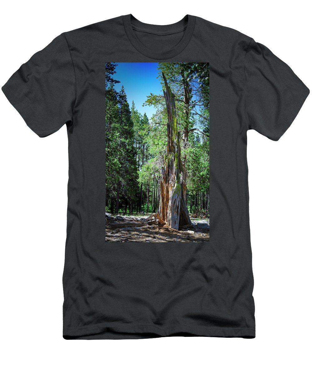 Celio Ranch Men's T-Shirt (Athletic Fit) featuring the photograph Lake Tahoe Tree by Rick Mosher
