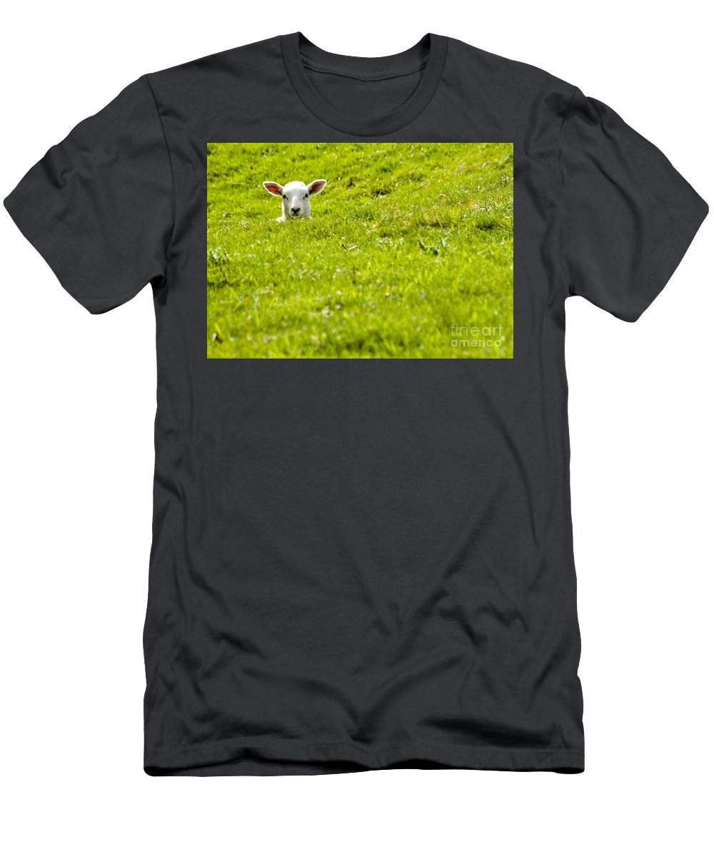 Lamb Men's T-Shirt (Athletic Fit) featuring the photograph Lamb In A Dip by Meirion Matthias