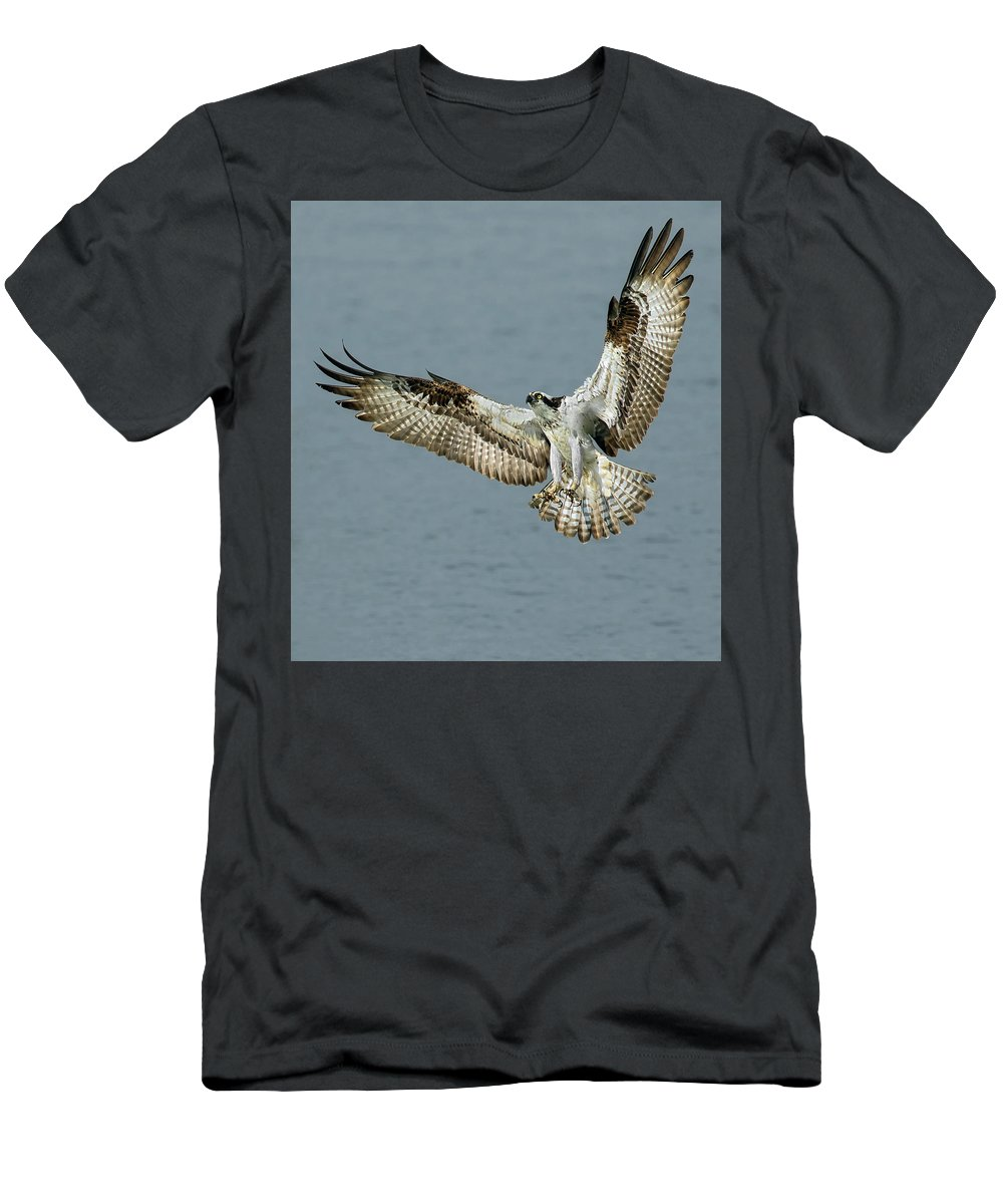 Osprey Men's T-Shirt (Athletic Fit) featuring the photograph Osprey Approach by Art Cole