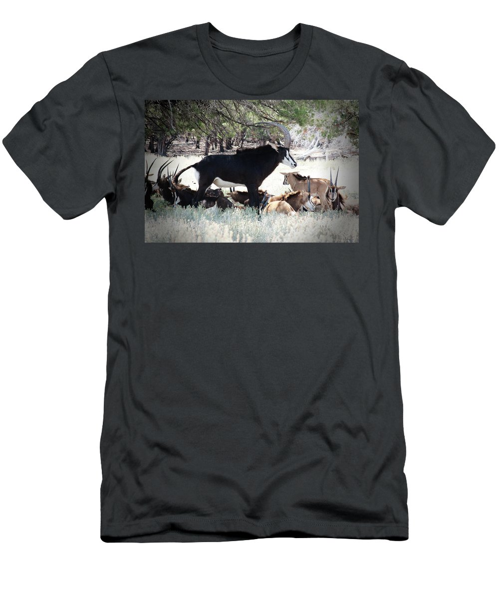 Sable Men's T-Shirt (Athletic Fit) featuring the photograph Leader Of The Pack by Douglas Barnard