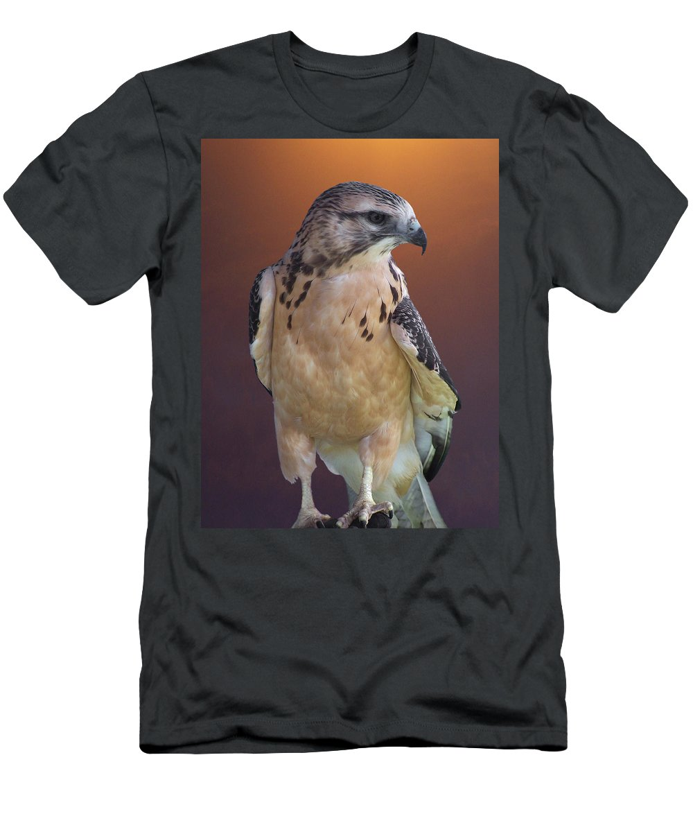 Light-morph Immature Swainson's Hawk Men's T-Shirt (Athletic Fit) featuring the photograph Light Morph Immature Swainsons Hawk by Ernie Echols