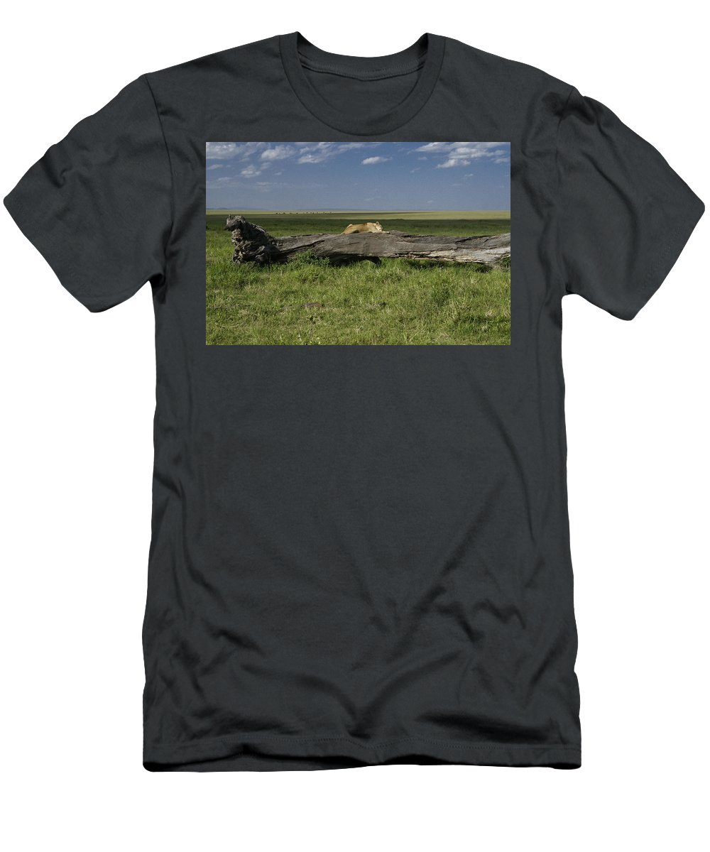 Africa T-Shirt featuring the photograph Lion on a Log by Michele Burgess