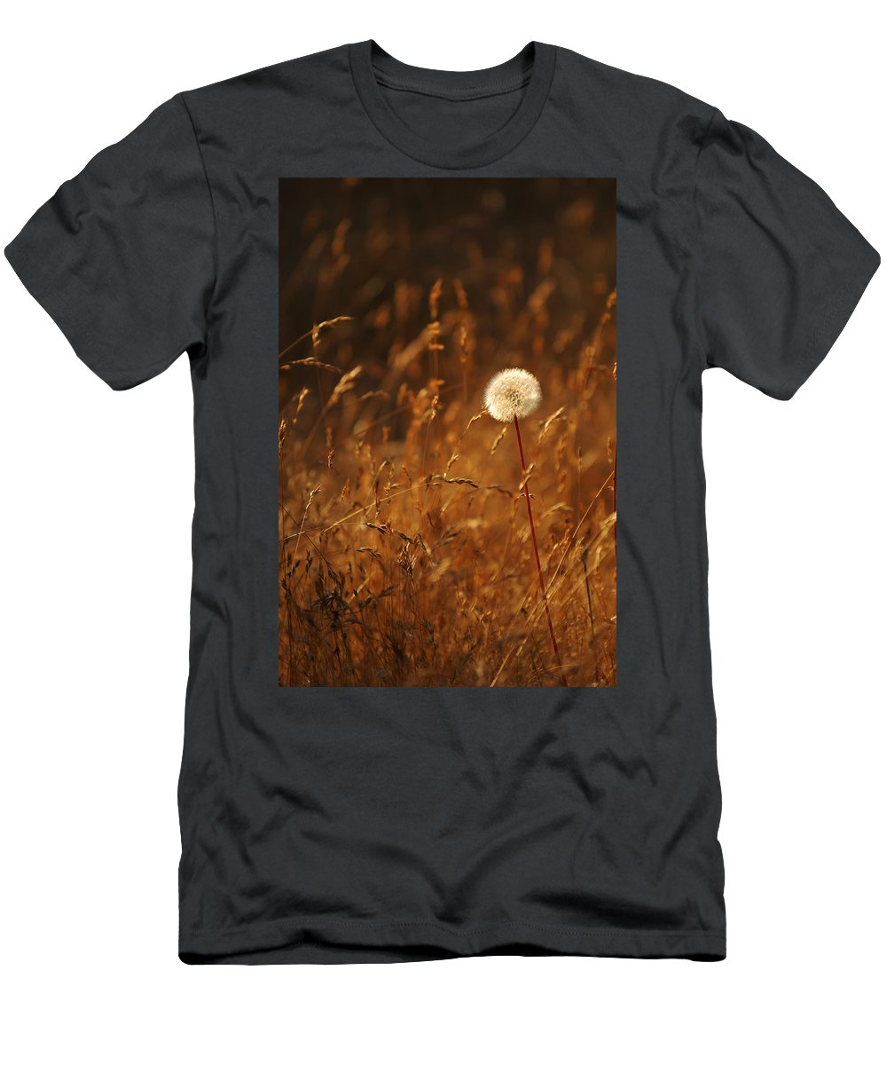 Nature Outdoors Field Dandelion Alone Single Sole Botanical Men's T-Shirt (Athletic Fit) featuring the photograph Lone Dandelion by Jill Reger