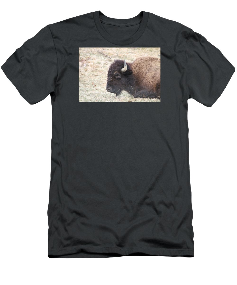 Buffalo Men's T-Shirt (Athletic Fit) featuring the photograph Looking At You by Ronald Fleischer