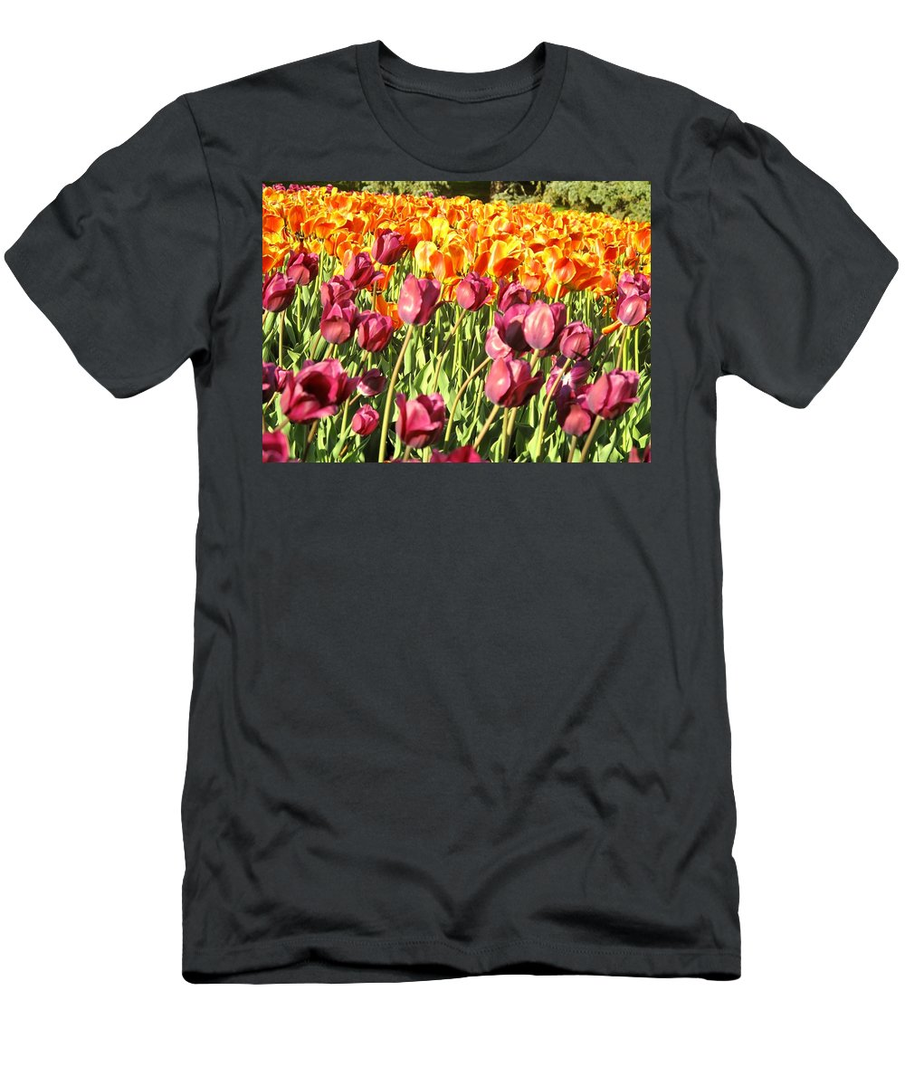 Tulips Men's T-Shirt (Athletic Fit) featuring the photograph Lots Of Tulips by Ian MacDonald