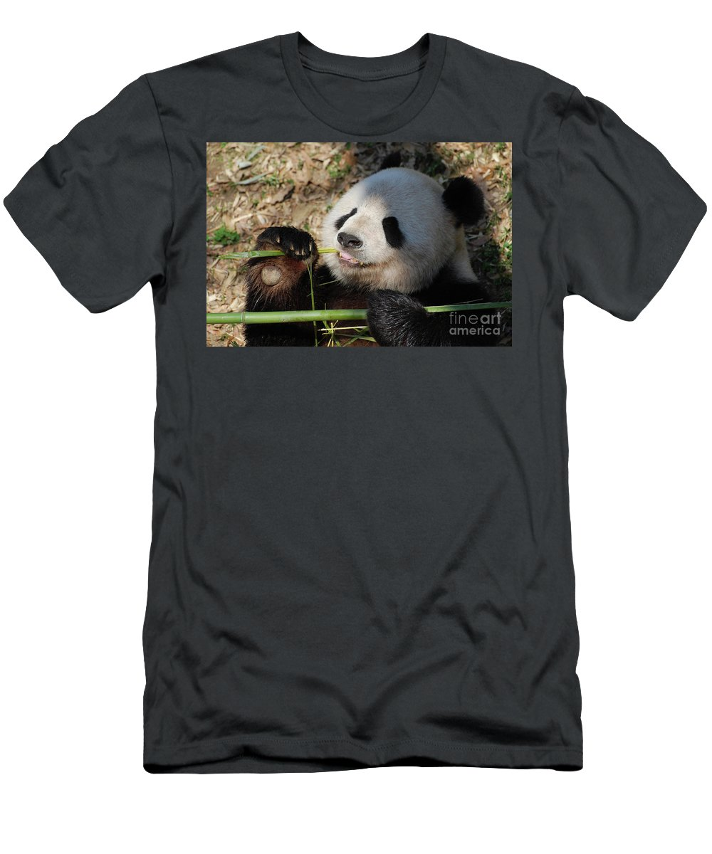 Panda Men's T-Shirt (Athletic Fit) featuring the photograph Lovable Giant Panda Bear With Big Paws by DejaVu Designs