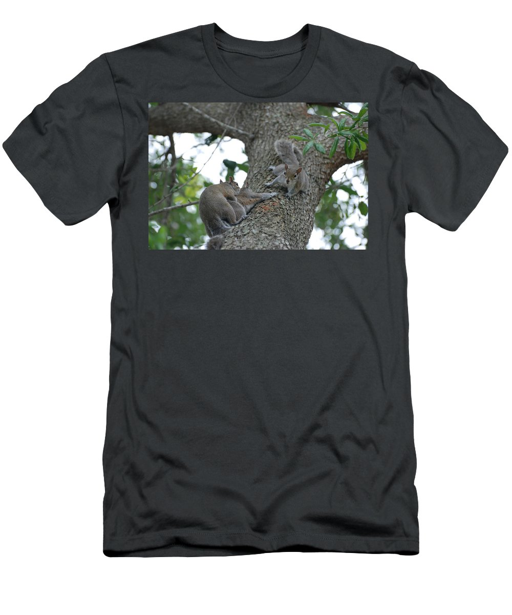 Squirrel Men's T-Shirt (Athletic Fit) featuring the photograph Luck Be A Lady by Rob Hans