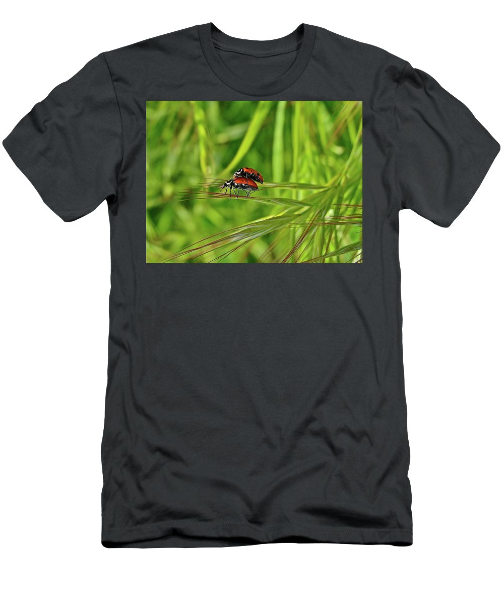 Insects Men's T-Shirt (Athletic Fit) featuring the photograph Macro Acrobats by Diana Hatcher