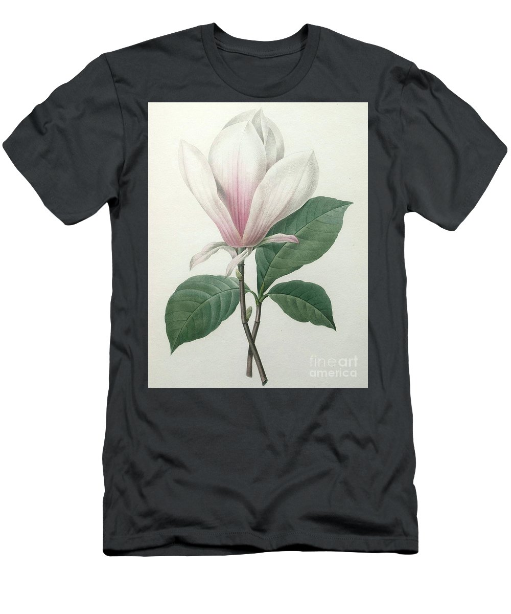 Magnolia Men's T-Shirt (Athletic Fit) featuring the painting Magnolia Soulangiana by Pierre Joseph Redoute