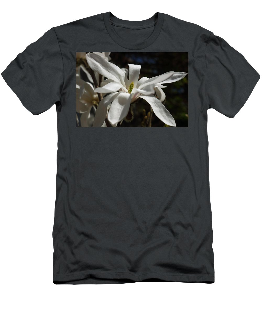 Flower Flowers Magnolia Stellata Star Shaped Petals Bloom White Light Shade Green Horticulture Garden Spring Sunshine Men's T-Shirt (Athletic Fit) featuring the photograph Magnolia Stellata by Jeff Townsend