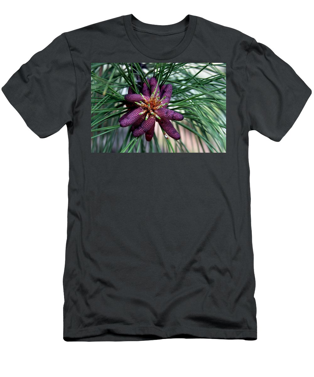 Pine Men's T-Shirt (Athletic Fit) featuring the photograph Male Ponderosa Pine Cones by Karon Melillo DeVega